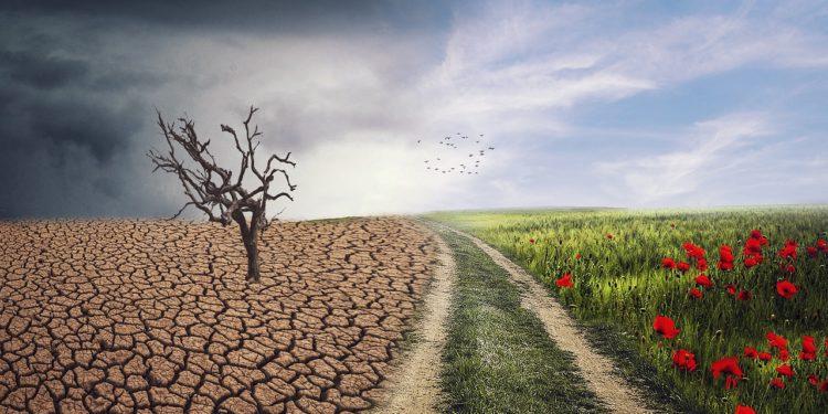 programy o środowisku 5