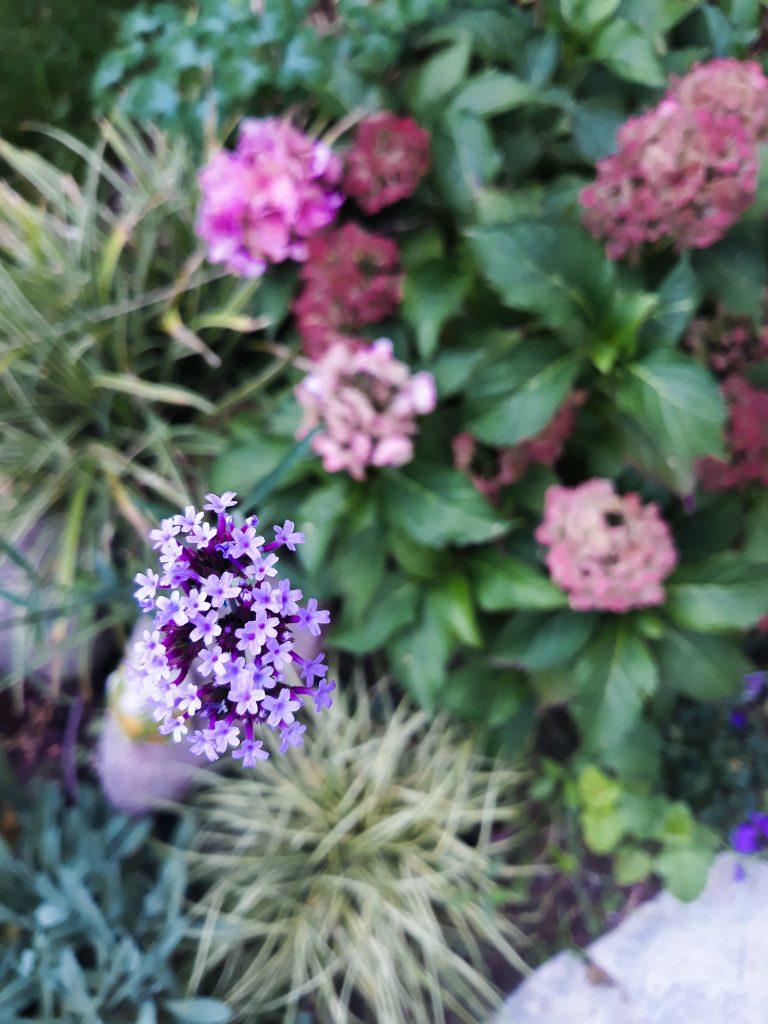 marzec w ogrodzie 4